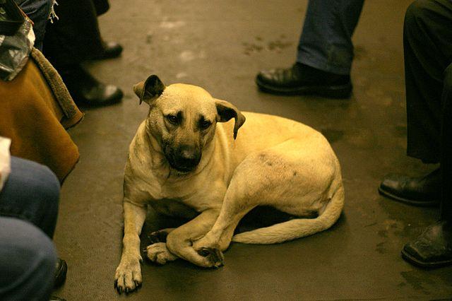 אימוץ כלבים טבעון