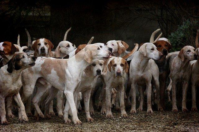 סוגי כלבים מוכרים