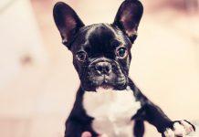אימוץ כלב קטן