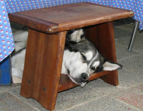 התנהגות מוזרה של כלב