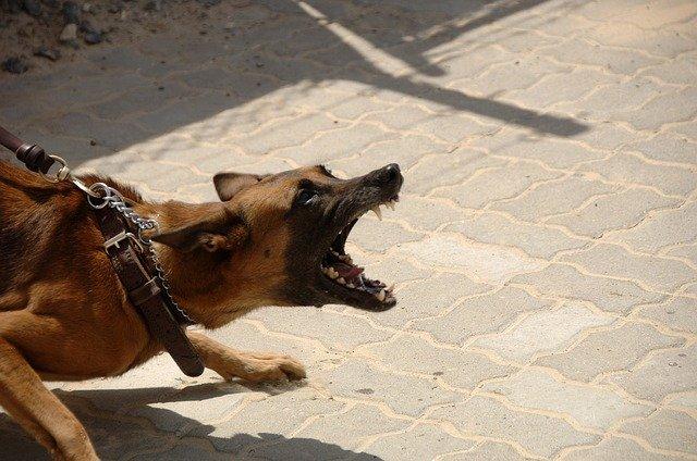 כלב תוקפני