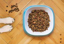 דירוג אוכל לכלבים