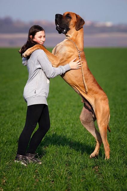 טכניקות אילוף כלבים