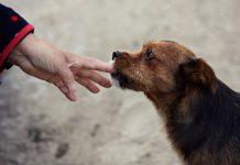 כלב ואדם
