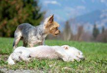 כלבים קטנים לאימוץ