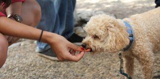 מערך התגמולים באילוף כלבים