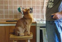 חינוך חתולים
